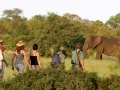Elela Africa Bushwalking Elefanten