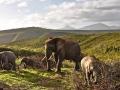Elela Africa Elefant Herde_Fotor