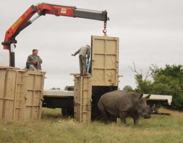 rhino-3_Fotor