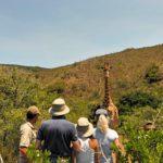 Elela Africa Bush walk mit Giraffe