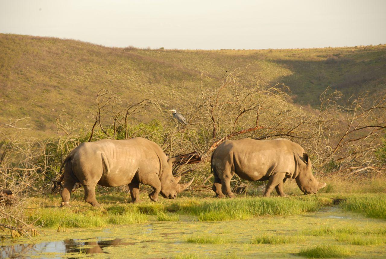Elela Africa Rhinos am See
