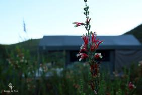 gondwana-tented-eco-camp-garden-route