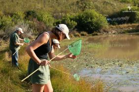 invertebrate-survey-gondwana-game-reserve-mosselbay