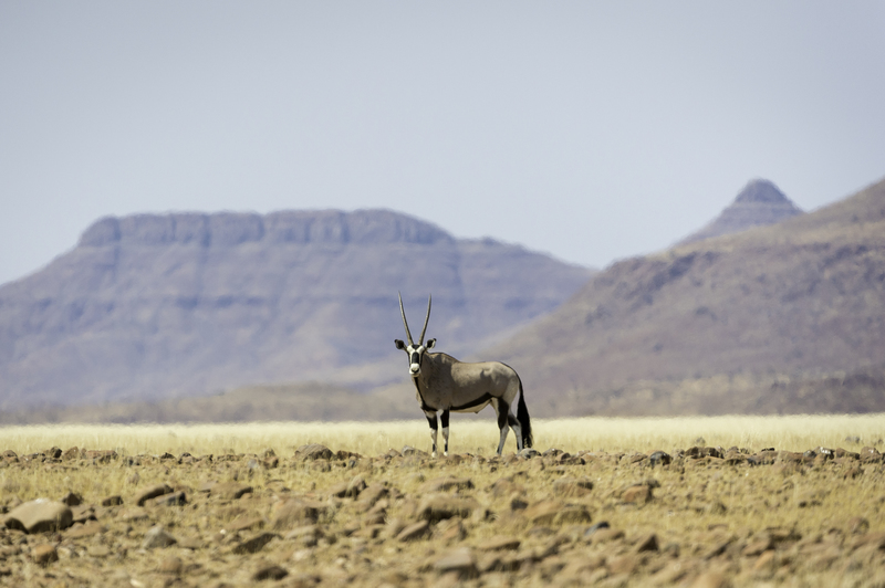desert_rhino_camp_2014-08-127