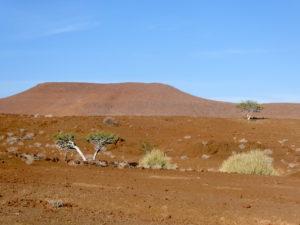 palmwag-nature3