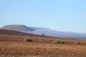 palmwag-nebel
