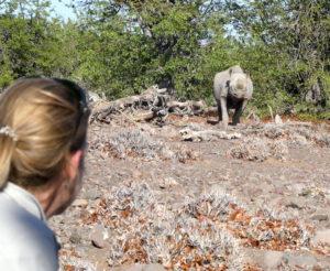 palmwag-rhino-nah2
