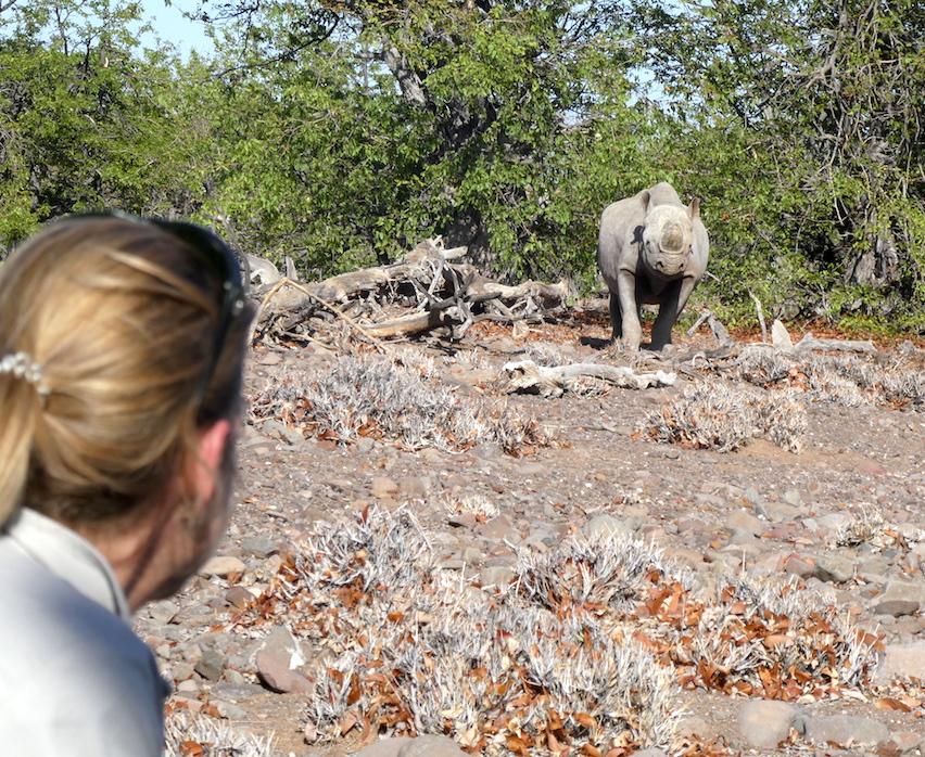 Dieses Bild hat ein leeres Alt-Attribut. Der Dateiname ist Palmwag-Rhino-nah2.jpg
