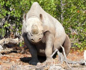 palmwag-rhino-sitzend