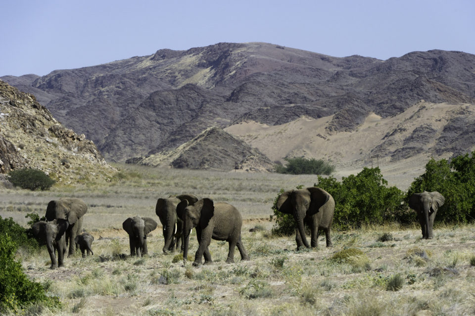 Dieses Bild hat ein leeres Alt-Attribut. Der Dateiname ist Wüstenelefanten-Elela-Africa-960x639.jpg