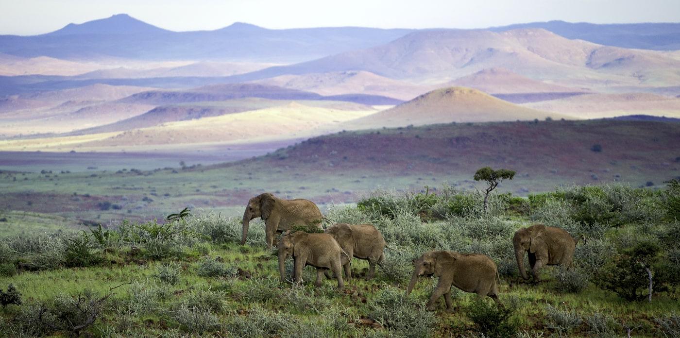 Elela-Africa-Elefanten-slider