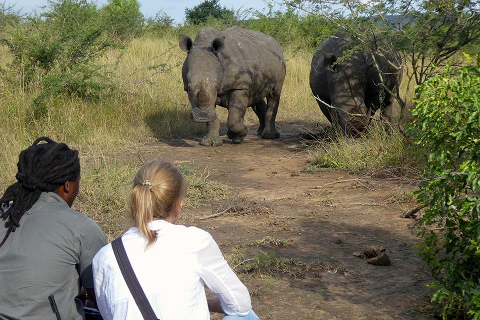 10 Rhino Tracking Elela Africa