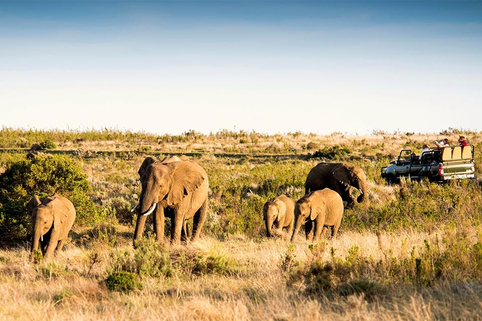 12 Urlaubs-Ranger Safari Garden Route Banner