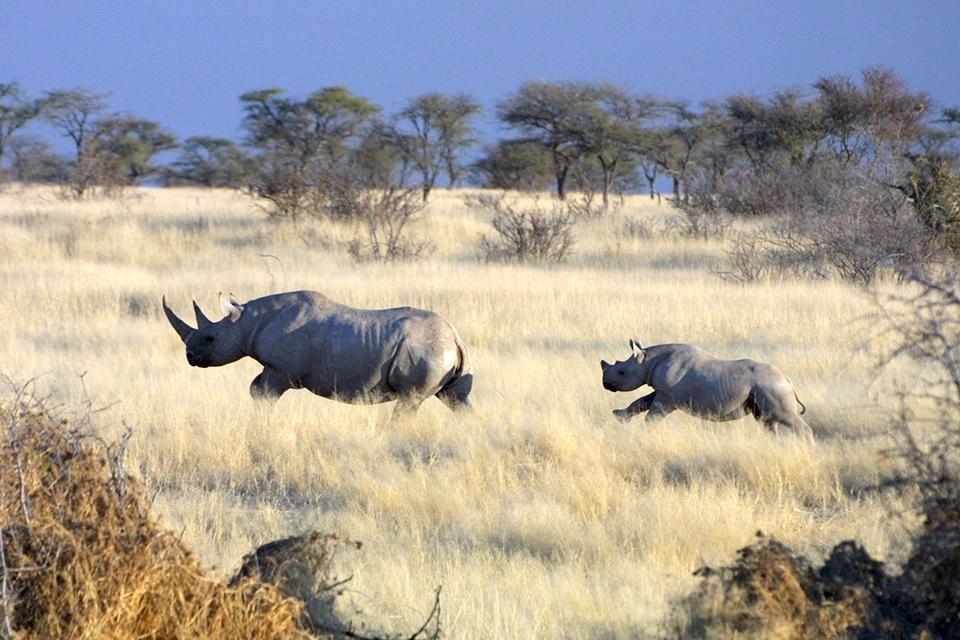 14 Urlaubs Ranger Safari Namibia Banner