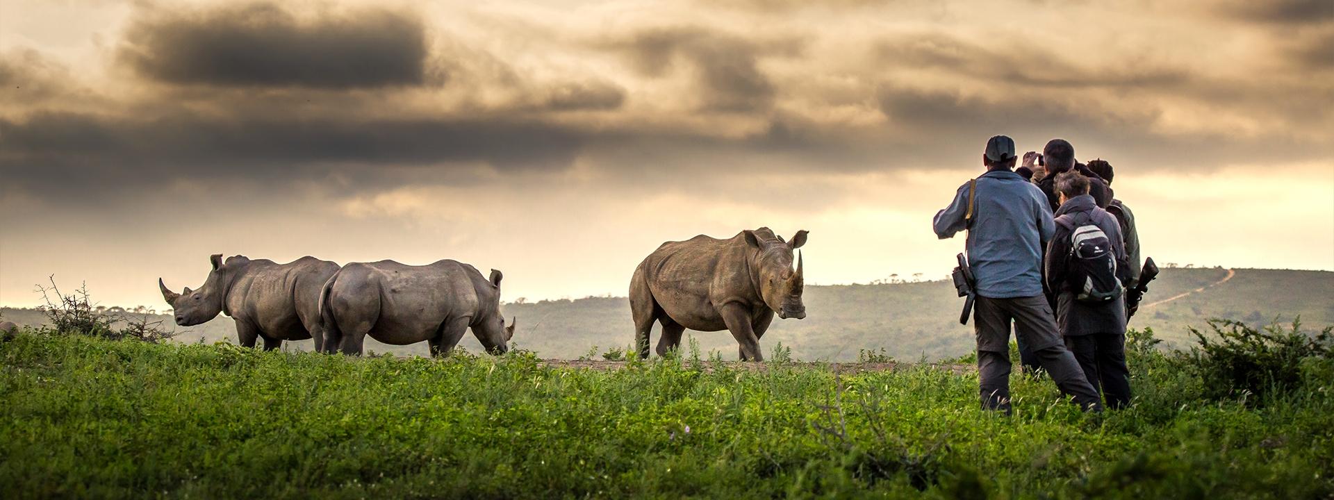 Mit dem Rhino Flüsterer Banner