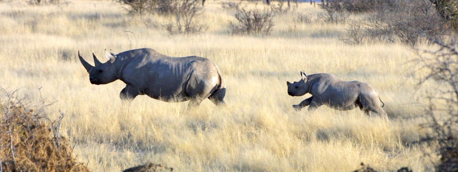Urlaubs Ranger Safari Namibia Banner
