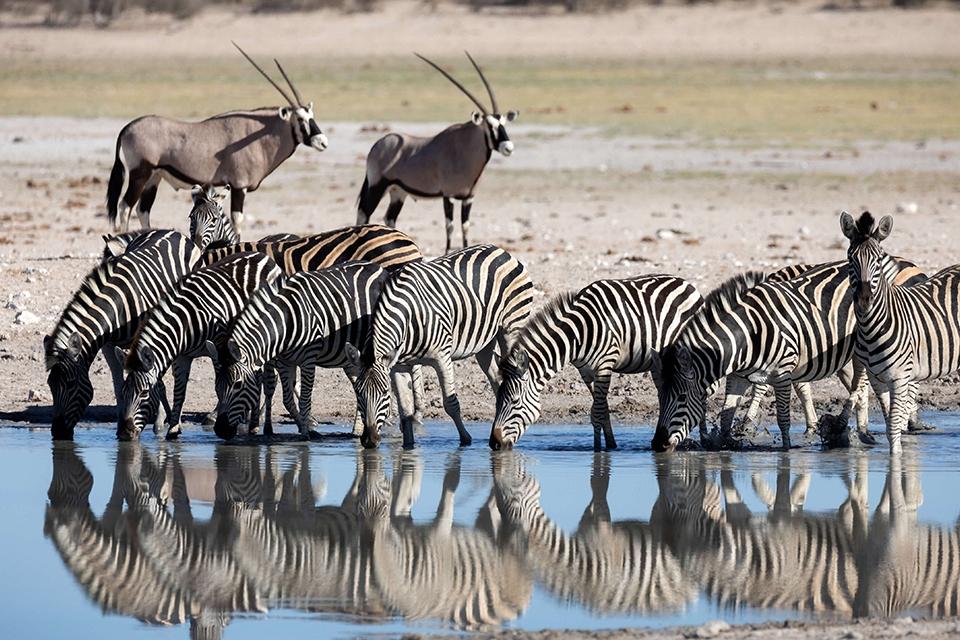 Urlaubs_Ranger_Kalahari_Elela_Africa_Banner