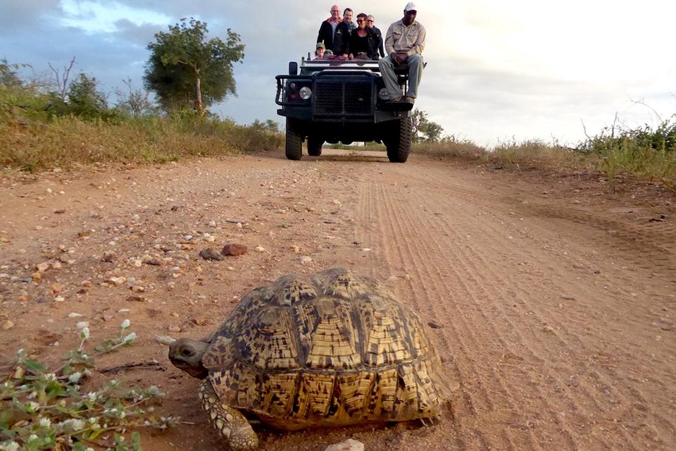 12 Safari mit Schildkröte
