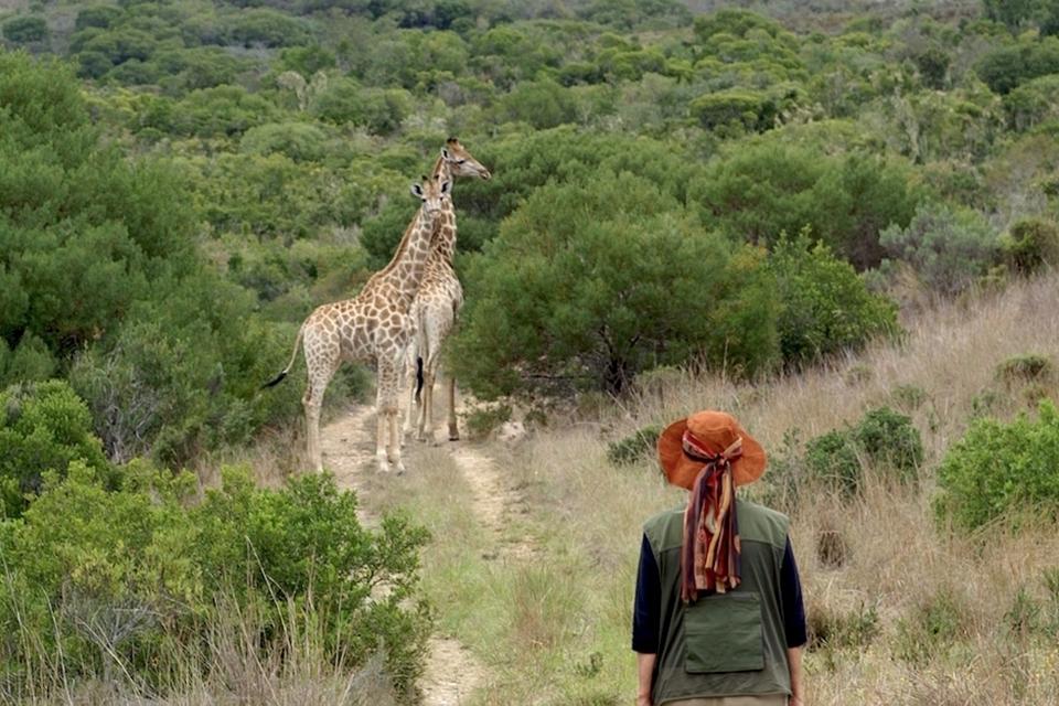 16 TITEL Walking safari mit Giraffen Elela Africa