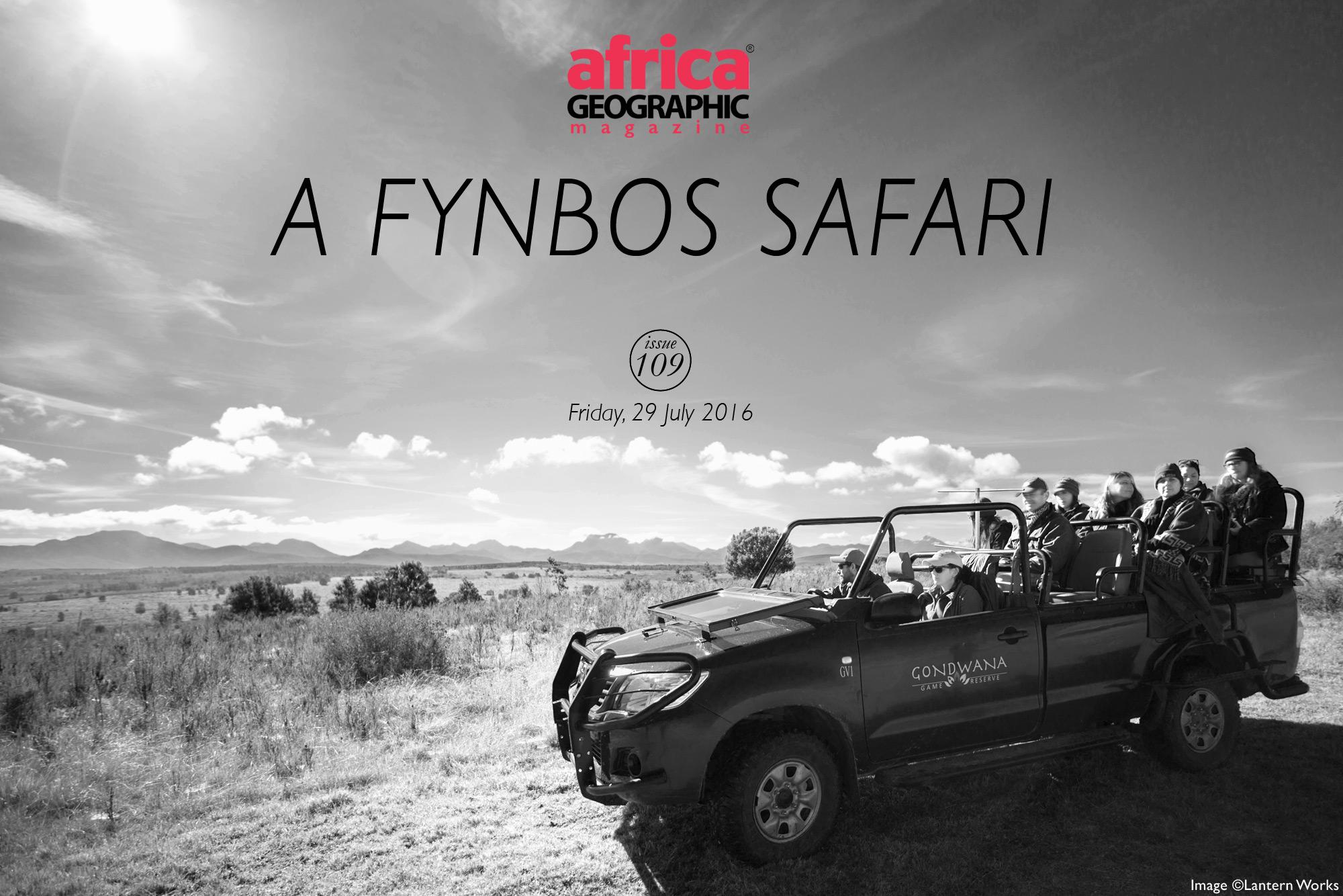 africa-geographic-a-fynbos-safari