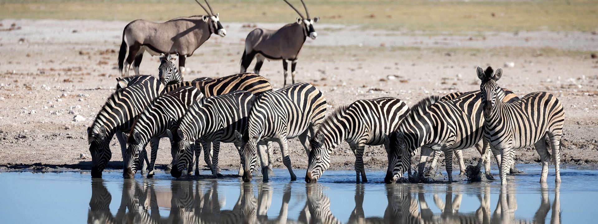 Titel_1_Urlaubs_Ranger_Kalahari_Elela_Africa-wide