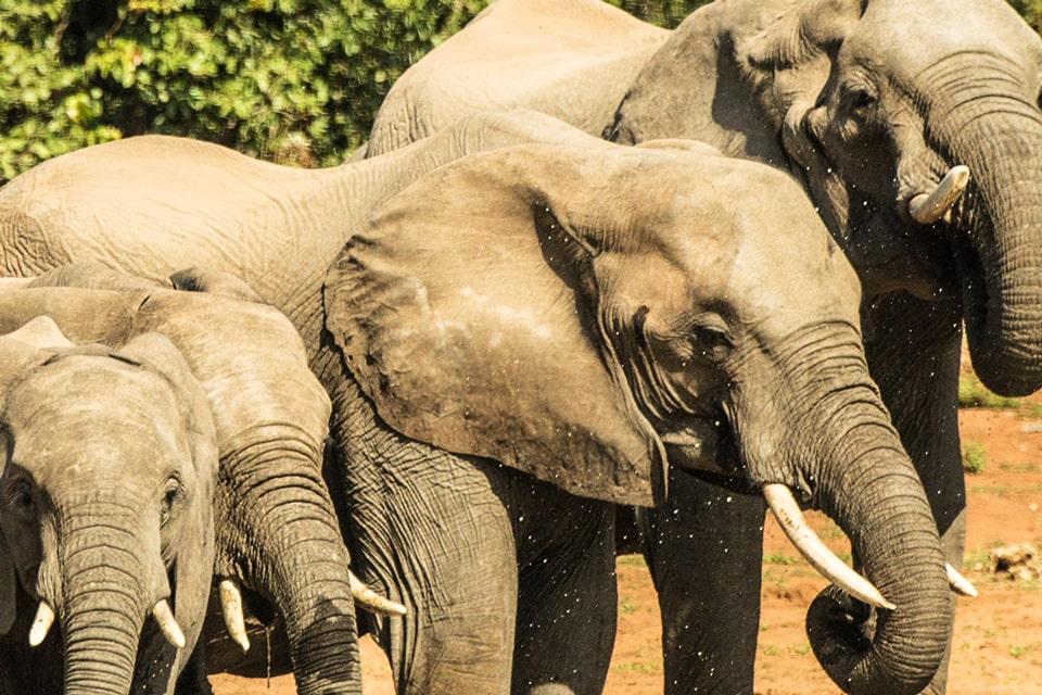 Kachel-Kruger-swasiland-elela-africa-elephants-reiseidee