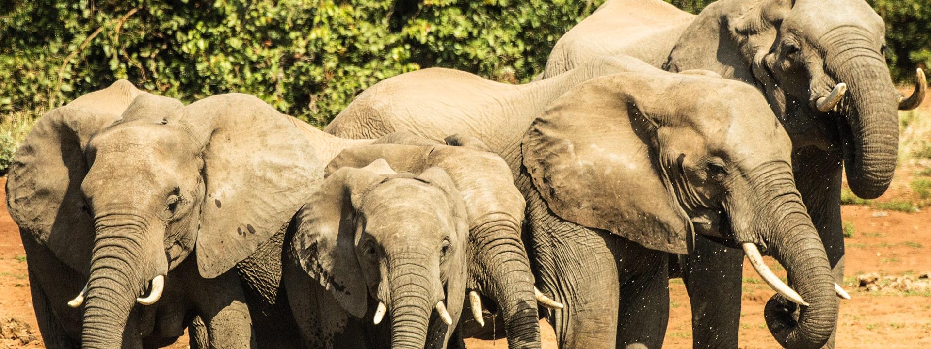 TB-2-Kruger-swasiland-elela-africa-elephants-reiseidee