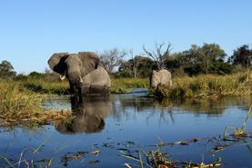 kachel-titel-elela-africa-magisches-okavango-mobile-safari
