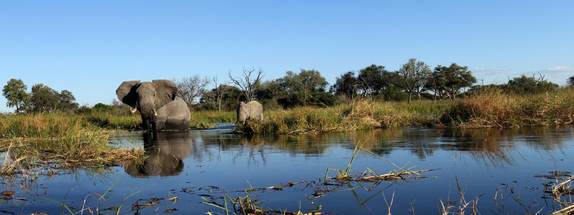 titel-magisches-okavango-elela-africa-delta