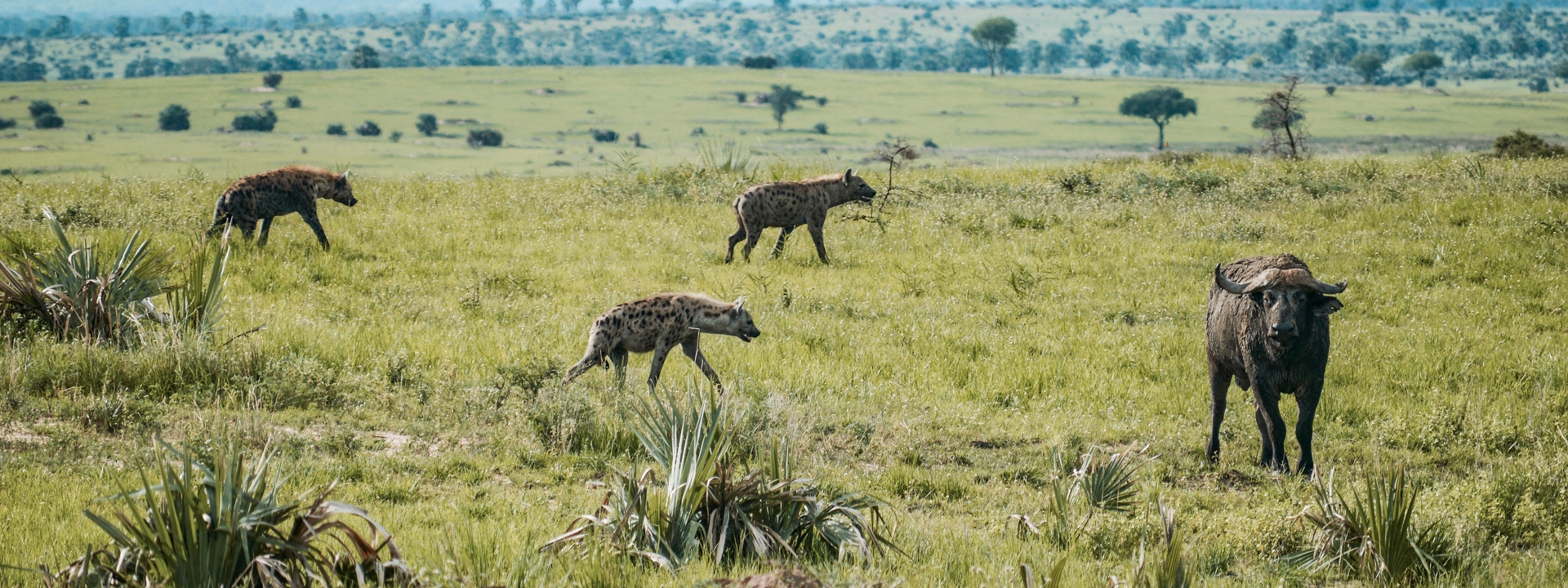 titel-uganda-urprung-neu-elela-africa