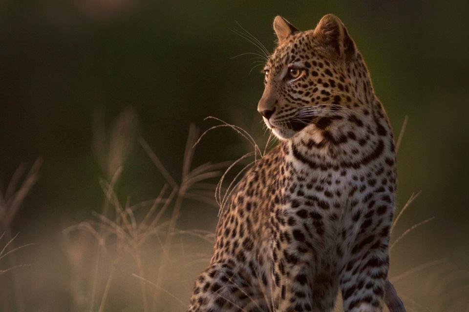 Afrika Safari mit Elela Africa in Botswana